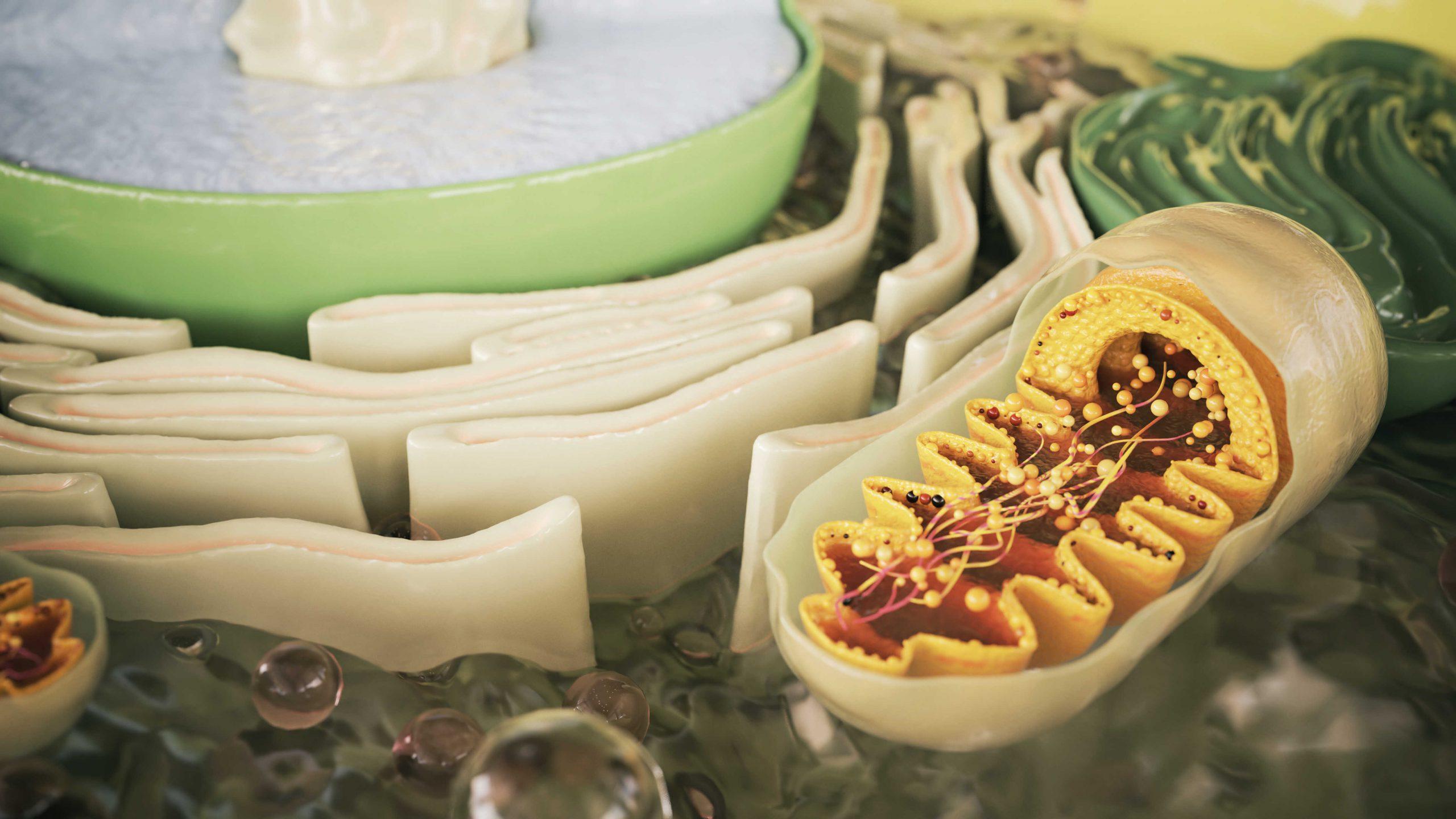 Mitochondrialne starzenie się skóry… Czy można je zatrzymać?