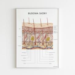 Plakat anatomiczny - BUDOWA SKÓRY