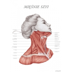 Plakat anatomiczny - MIĘŚNIE SZYI