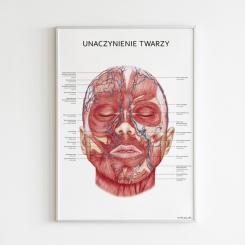 Plakat anatomiczny - UNACZYNIENIE TWARZY